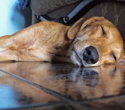 8 Things Everyone Should Consider Before Traveling with a Pet