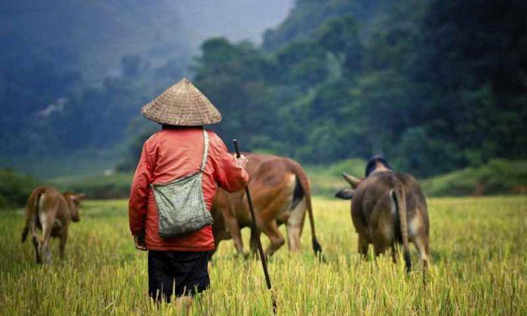 Cheap Flights from Darwin to Cambodia