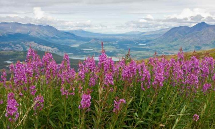 Cheap Flights from Vancouver to Whitehorse
